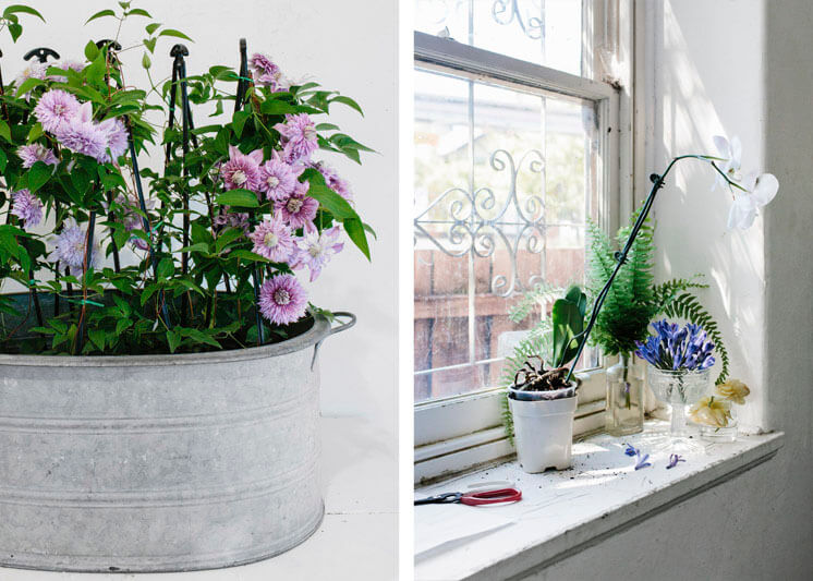 Fleur McHarg Floristry and Event Styling Orchid Window Est Magazine