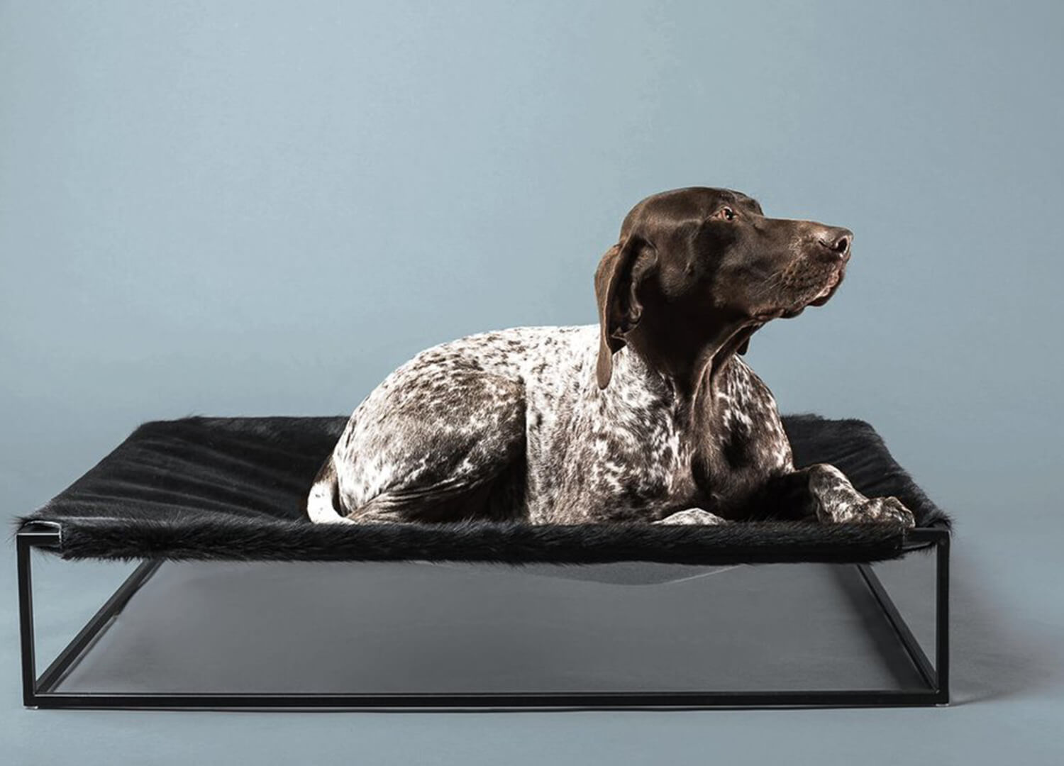 est living angus dog beg designer companion furniture
