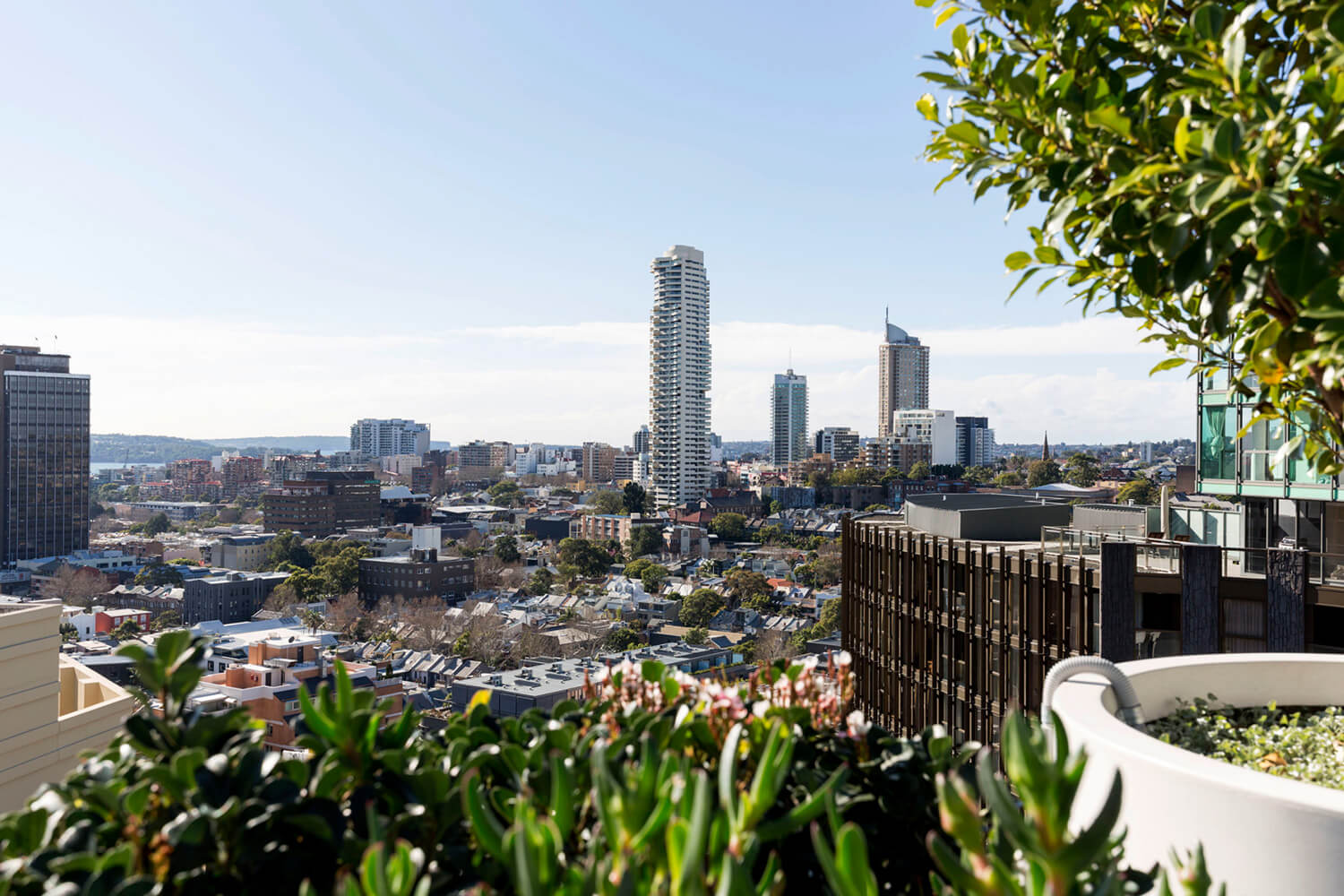 est living open house surry hills roof top apartment bresic whitney.13