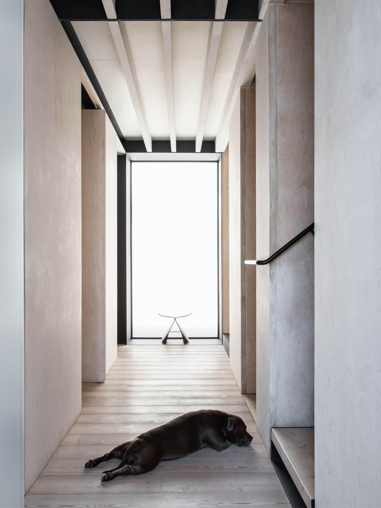 est living resident dog nicole england 13