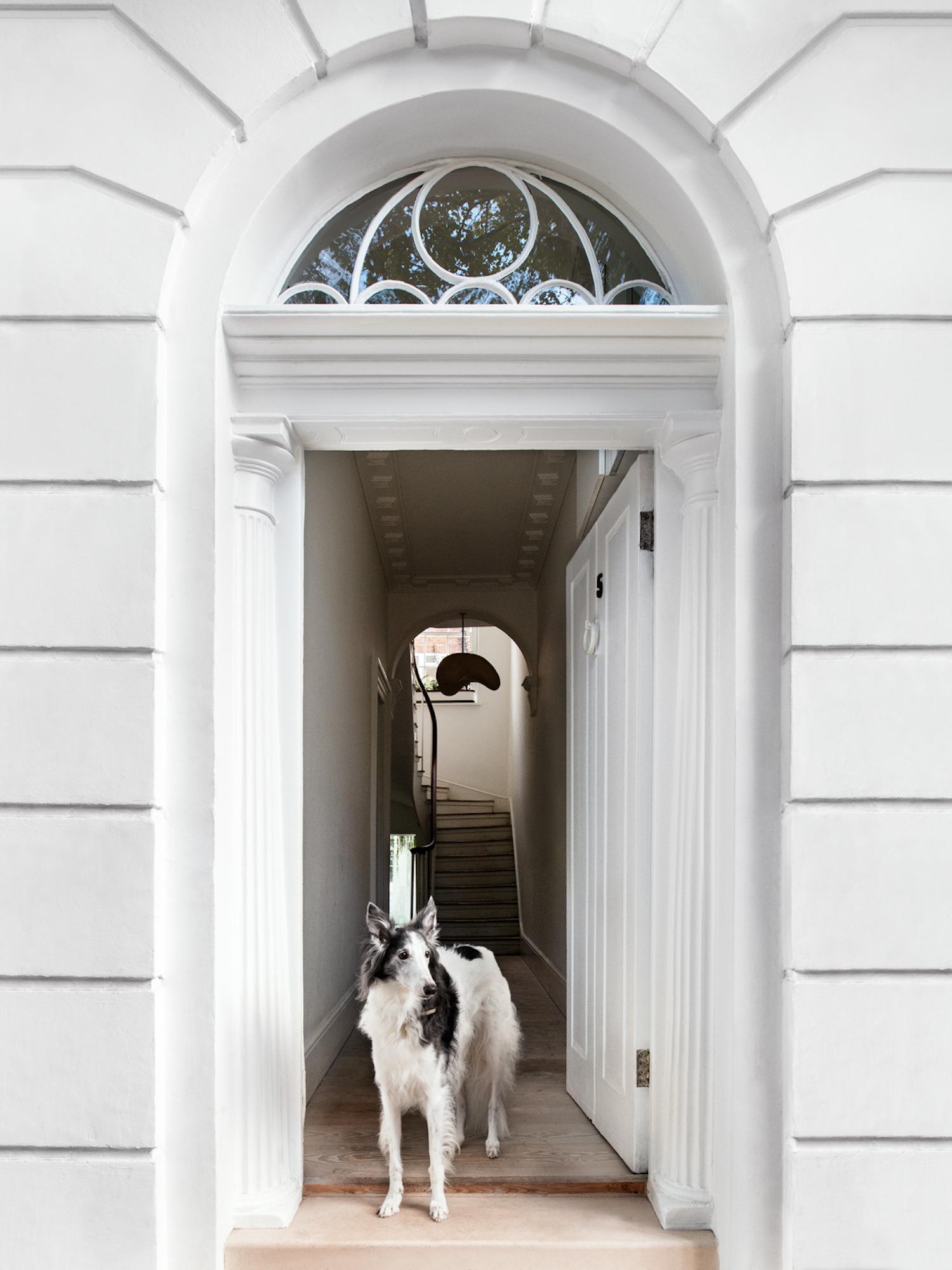 est living resident dog ii nicole england 12